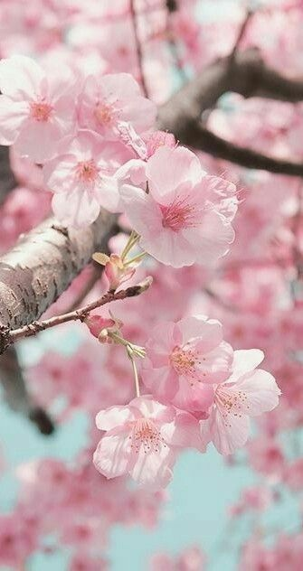 Image about pink in Blossom Paradise by Re on We Heart It