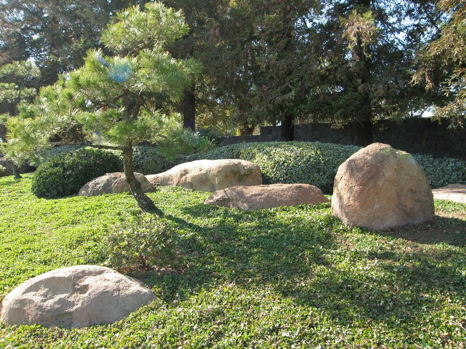 40 species of pine trees and shrubs pine tree trees