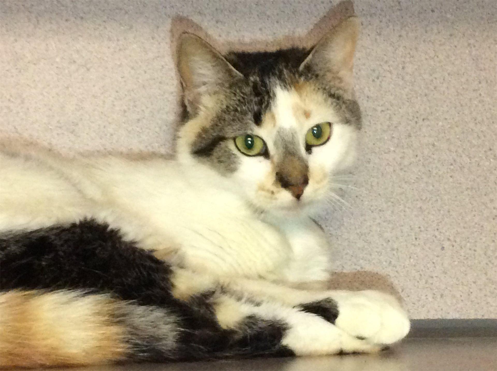 Inland Valley Humane Society Humane society, Cat