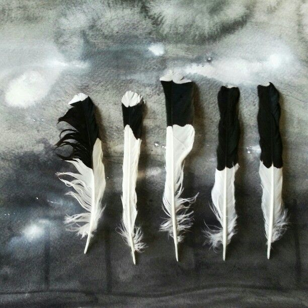 Feathers 5