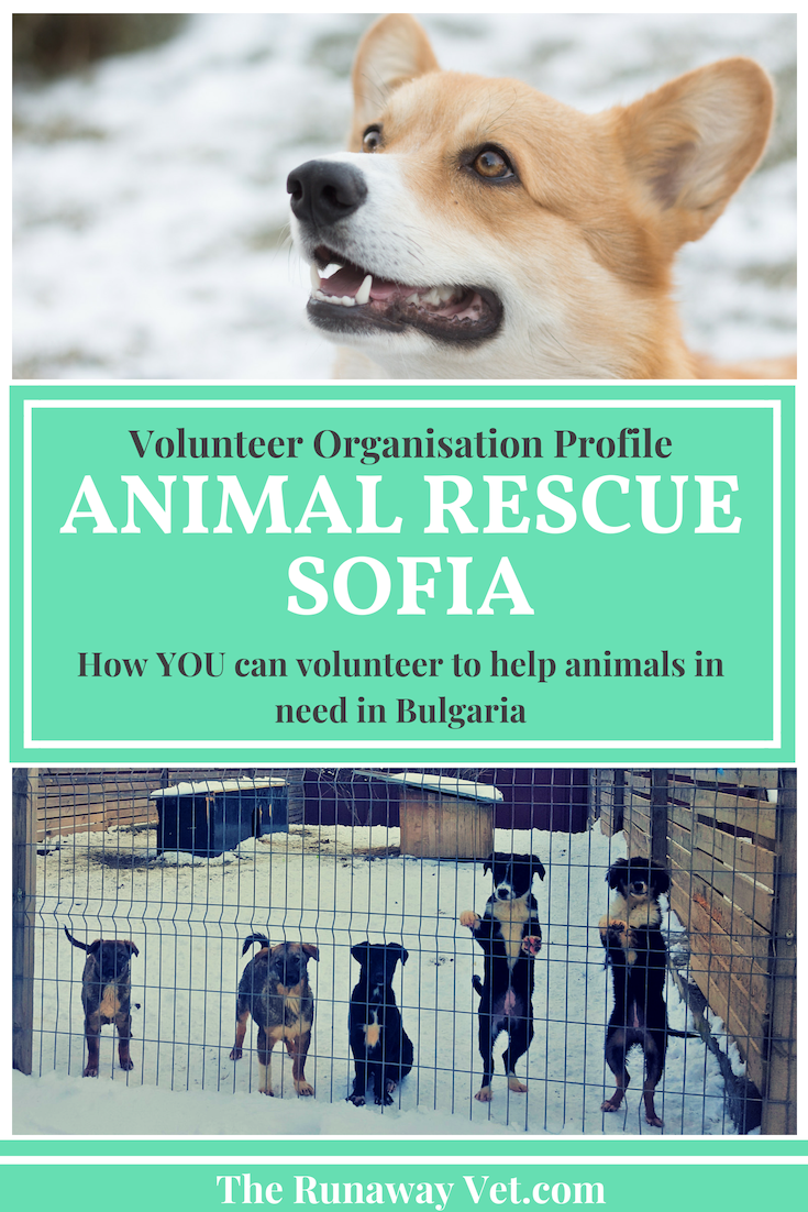 Animal Rescue Sofia Bulgaria Animal Rescue Animal Rescue Center Animals