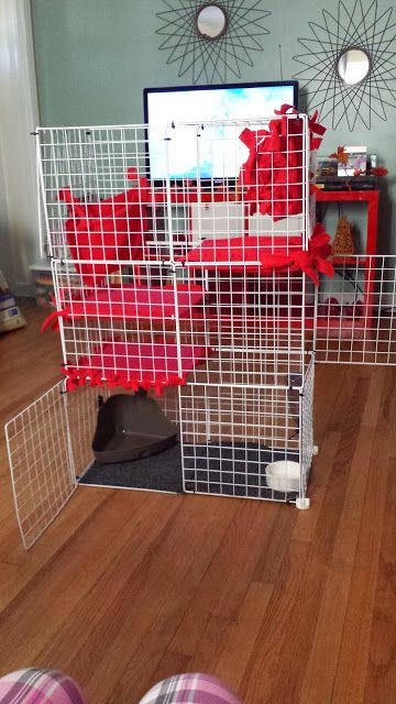 Simple Diy Ferret Cage Ferret Cage Pet Ferret Ferret Toys
