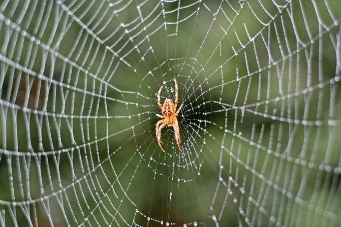 0bfae87629d97968edff4f62638553b3 - How To Get Rid Of A Spider Infestation Outside