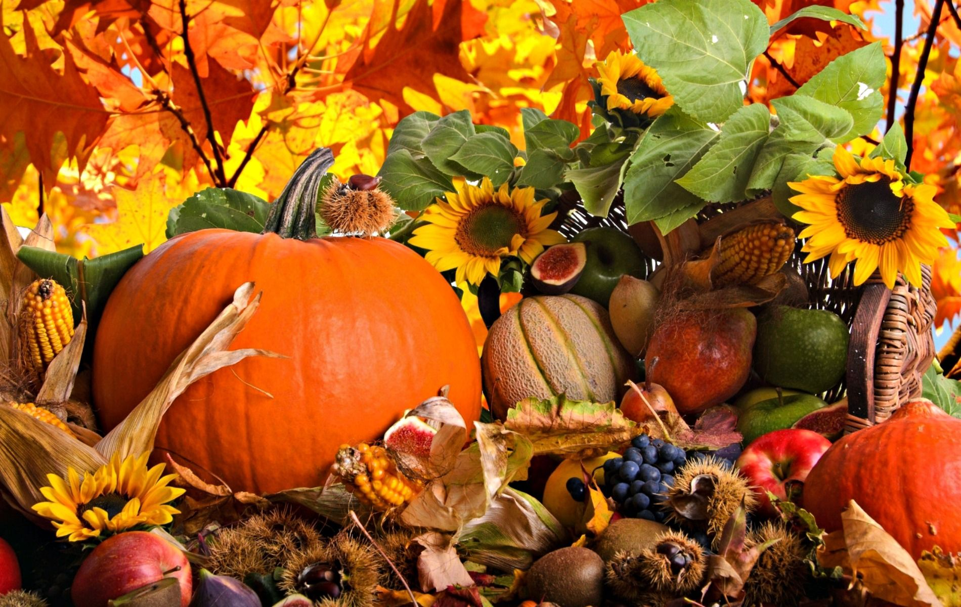 Fall Harvest Awesome Wallpapers 3779 Free fall wallpaper