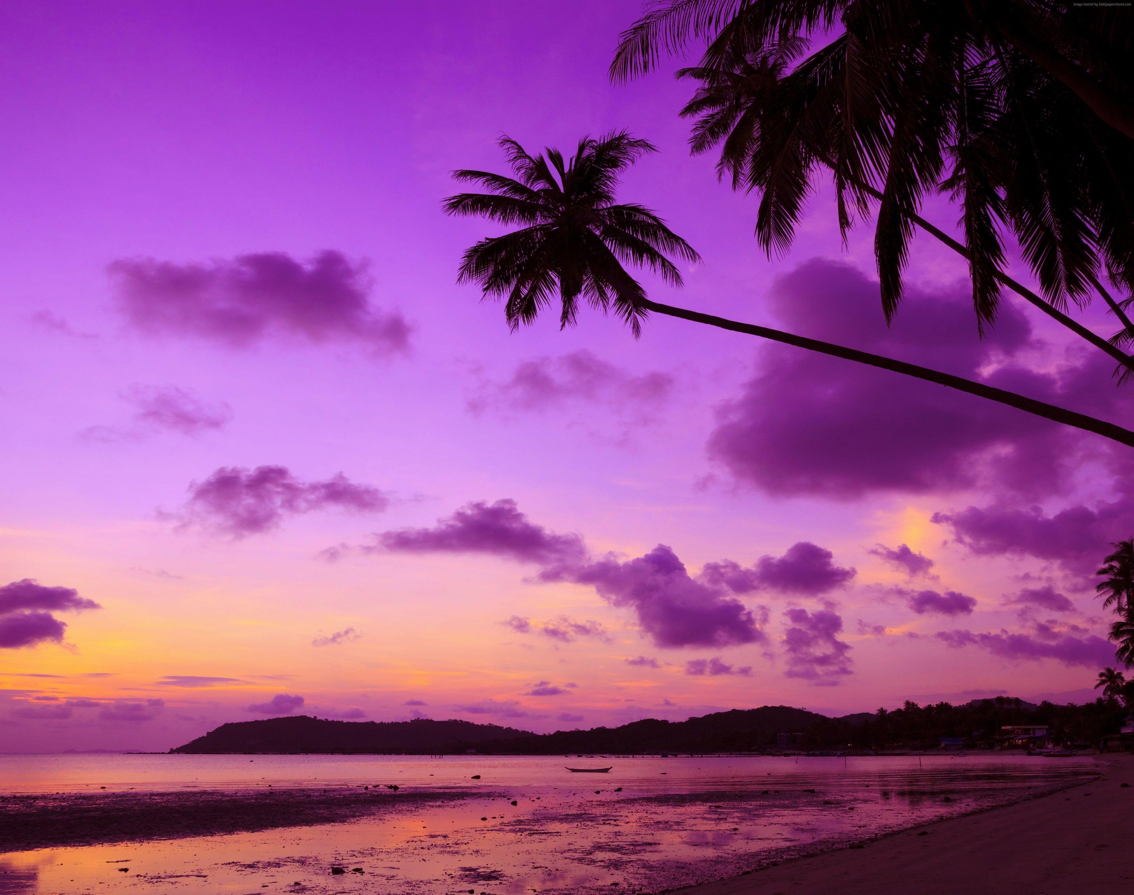 3840x3029 Trees 4k Wallpaper Hd Full Screen Purple Sky Palm Wallpaper Thailand Wallpaper