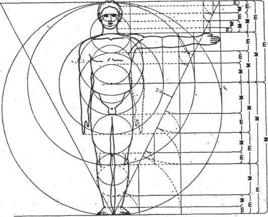 Examples Of The Golden Ratio You Can Find In Nature ...