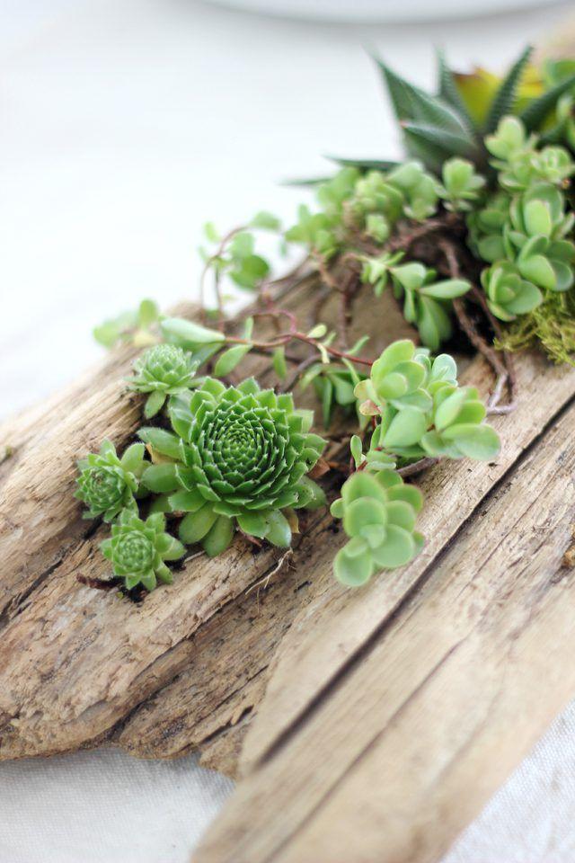 Diy Succulent Driftwood Planter Plante Grasse Exterieur Deco