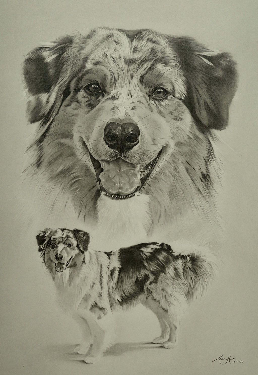 Commission Australian Shepherd Marble By Captured In Pencil