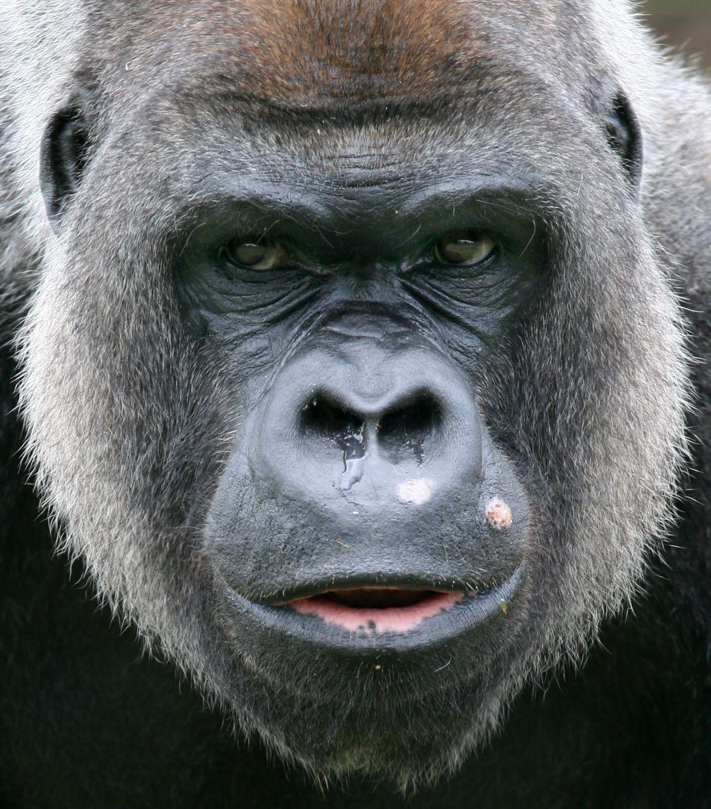 Смотреть картинки лица животных