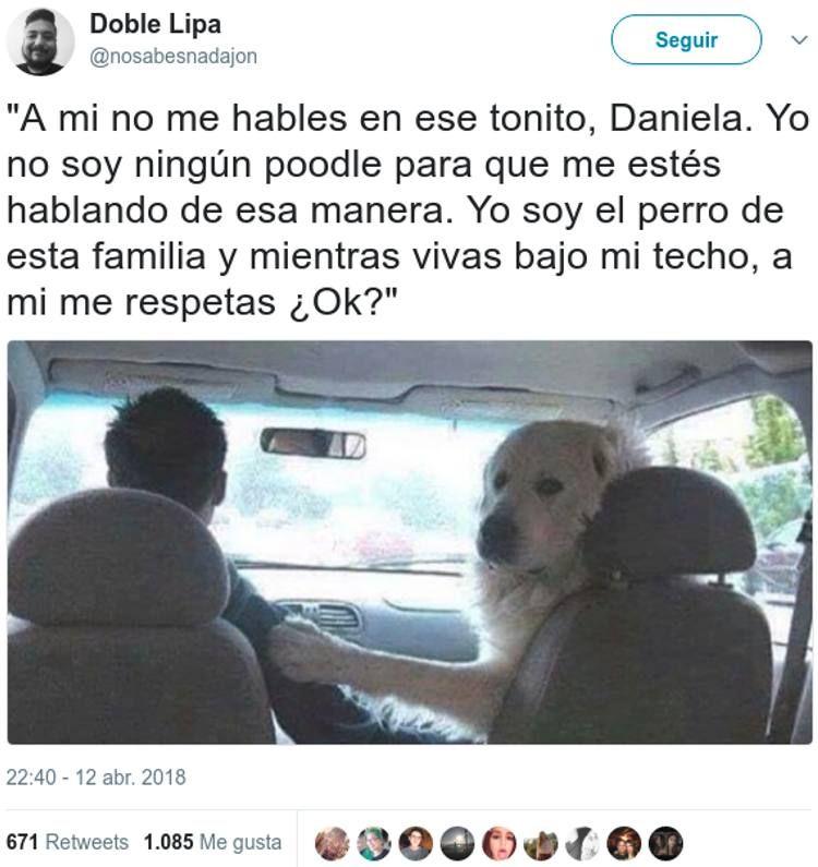 El Supuesto Y Simpatico Mensaje De Un Perro Indignado A Su Familiar Memes Make Me Laugh Funny Animal Memes
