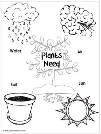 Image result for what plants need to grow worksheet