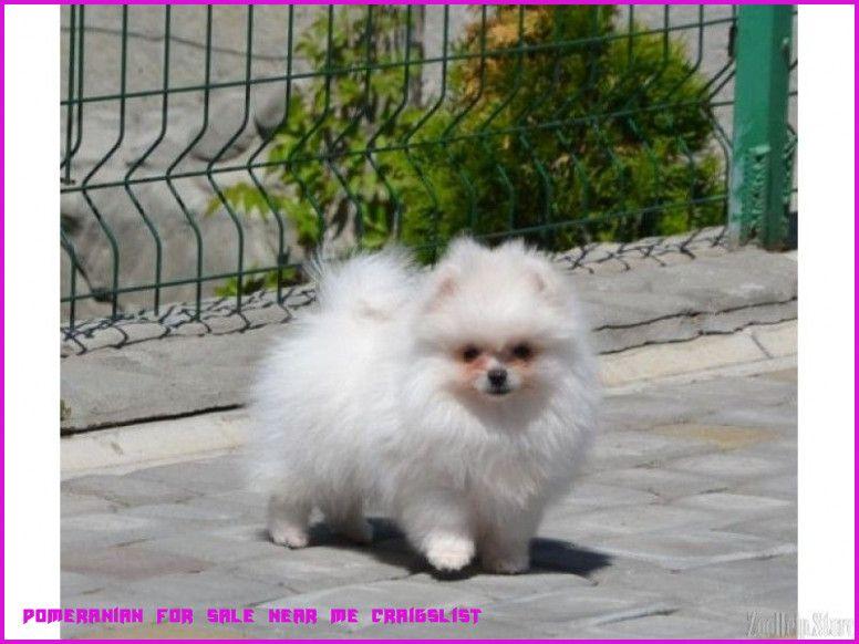 Pets On Craigslist New Orleans - SPETW