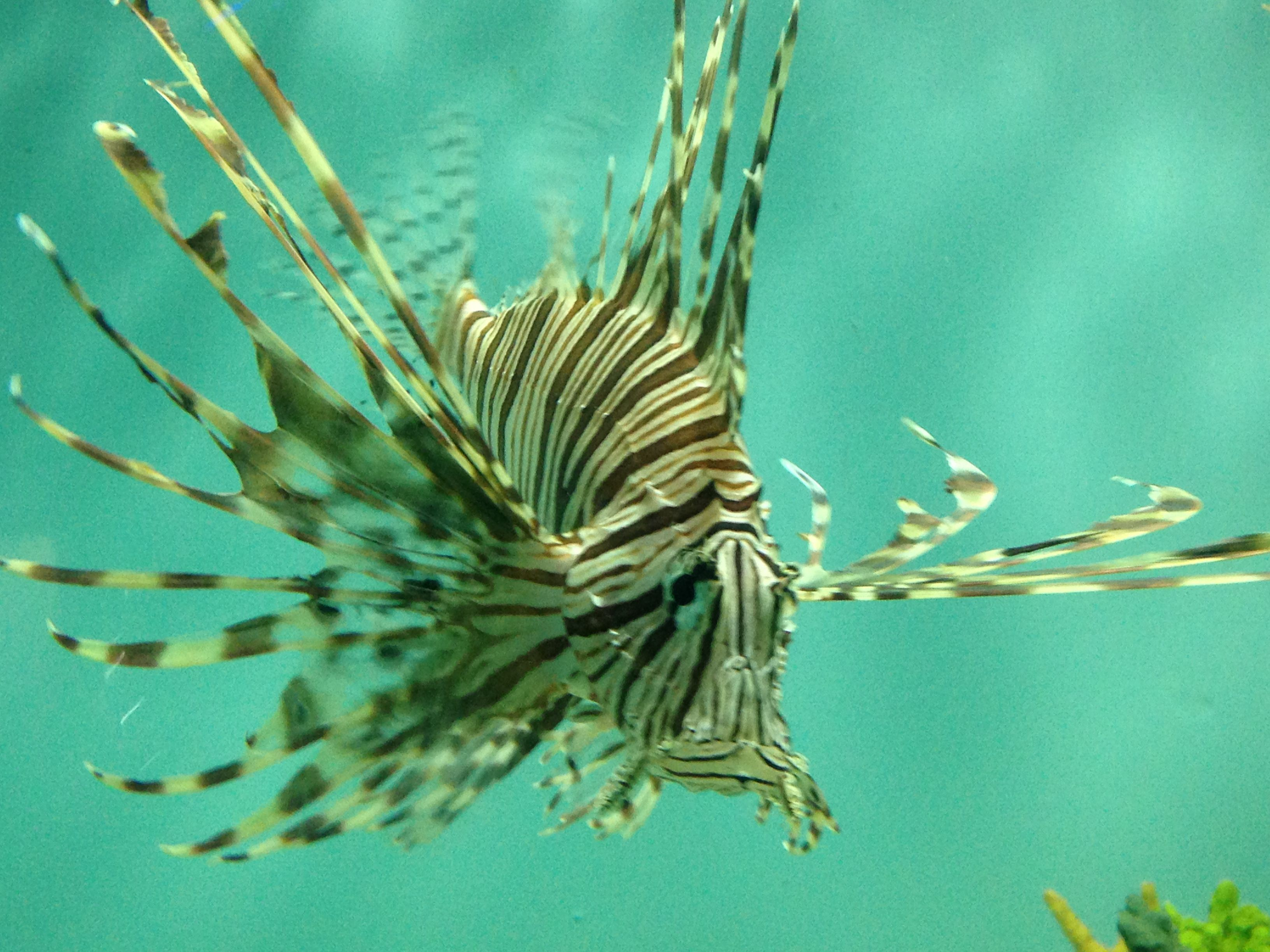 Fish aquarium in niagara falls - Lion Fish At Niagara Falls Aquarium