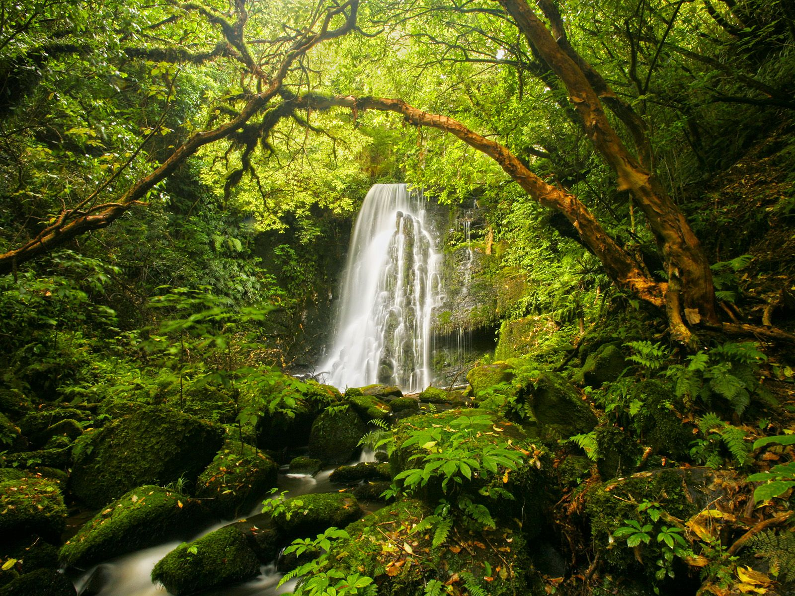 New Zealand Small Waterfall In The Forest With Images