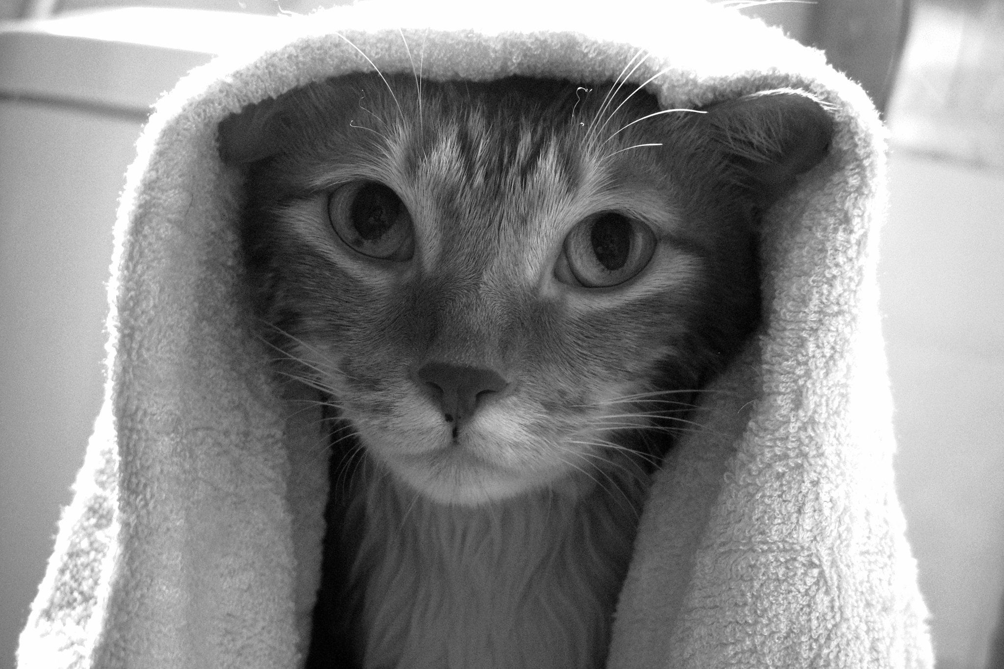 Big Eyes Kitten After Bath Kittens Kitten Big Eyes