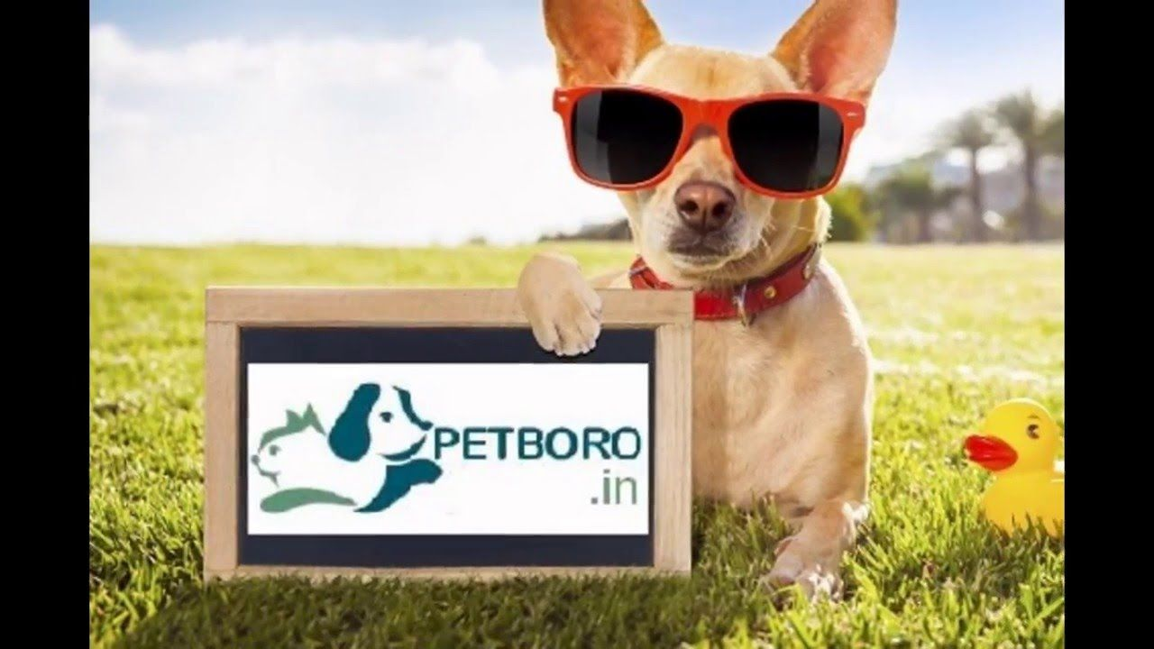 Petboro Pet Resort and Kennel Pet resort, Pets, Resort