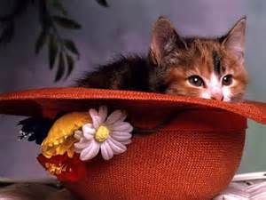 cat in a hat wallpaper | Animalwallpapers.in