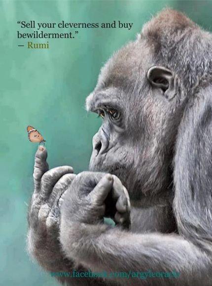 Top 100 favorite animals