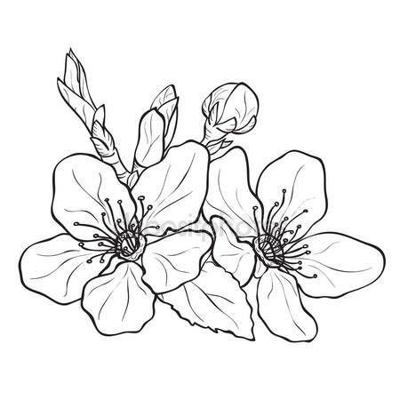 Scarica , Fiori , fiori di ciliegio disegno \u2014 Illustrazione stock 66398567
