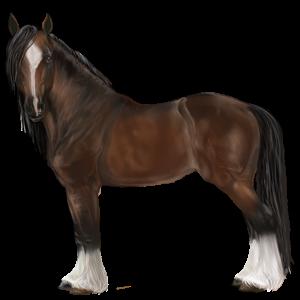 I Bєlíєvє Iɲ Y๏u, Pegasus Gypsy Vanner Dark bay Tobia - Howrse