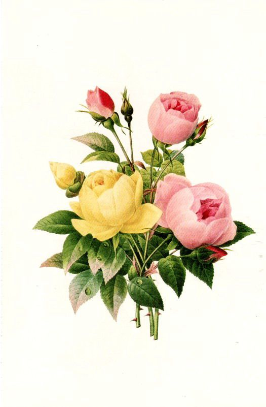 Yellow and Pink Roses Art Print of Vintage Art