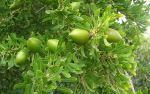L'olio di Argan o Argania Spinosa, l'olio naturale più pregiato in tutto il mondo, un vero toccasana per la pelle con effetto idratante e antiage. http://www.macrolibrarsi.it/speciali/le-proprieta-dell-olio-di-argania.php?pn=3148