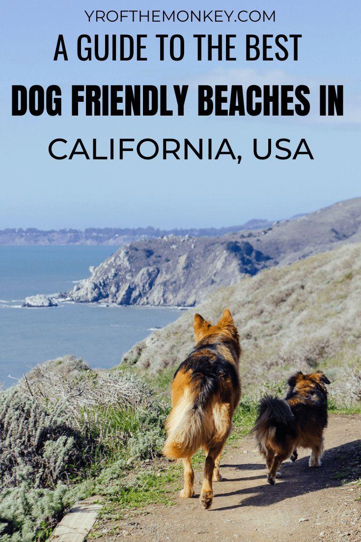 Top Dog Friendly Beaches In California A Dog Mom S Guide Dog Friendly Beach Dog Friends Travel Usa