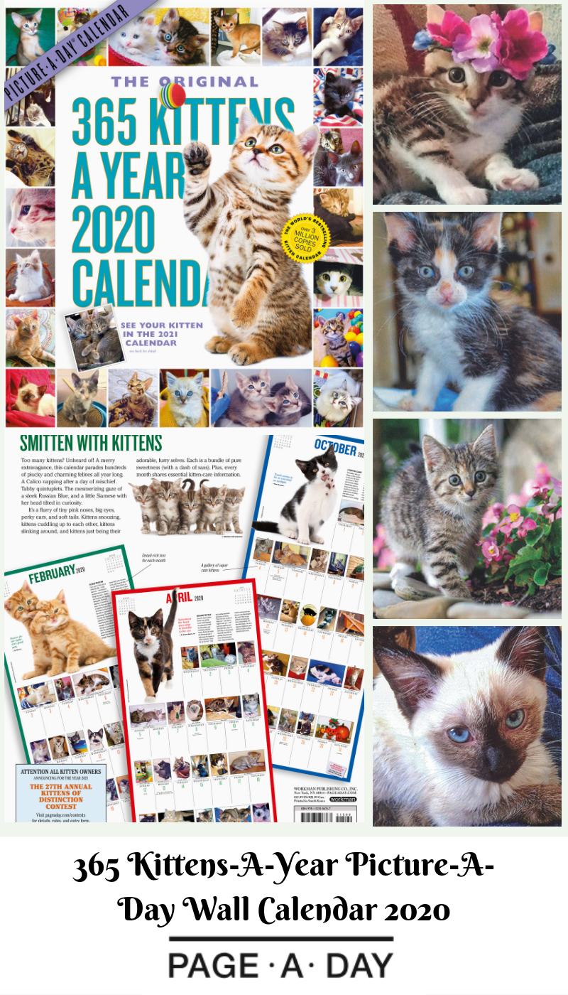 365 Kittens A Year Picture A Day Wall Calendar 2020 Kittens Dog Photo Contest Cat And Dog Photos