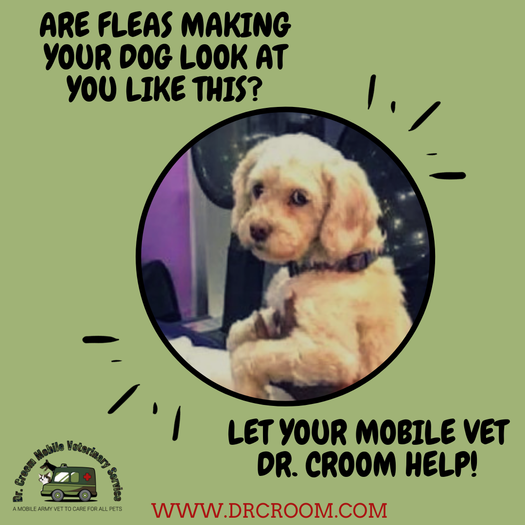 Don T Let Those Pests Into Your Home For The Winter Call Dr Croom Now For An Appointment So You Can Get Prescription Flea Tick Medicine Straight F Mobile Vet