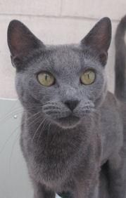 Stubbington Ark Rspca Cat Adoption Pet Adoption Animals