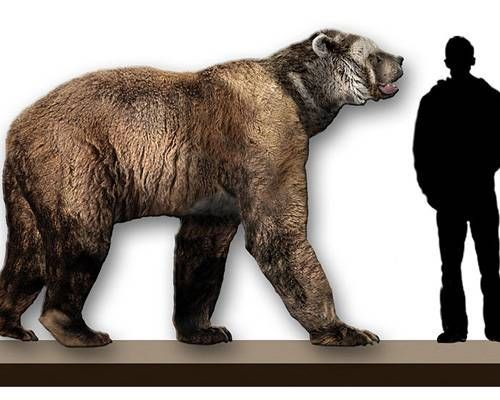 size comparison of a giant short-faced bear to a human