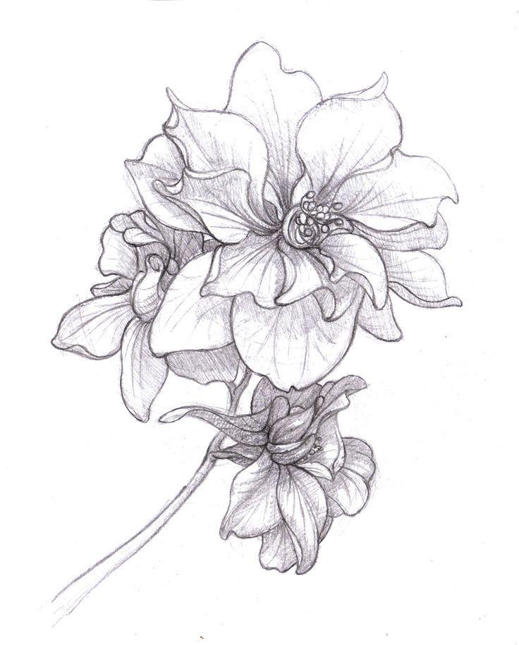 larkspur tattoo on pinterest july birth flowers birth flowers rh pinterest nz Larkspur Tattoo Meaning Purple Larkspur Flower Tattoo