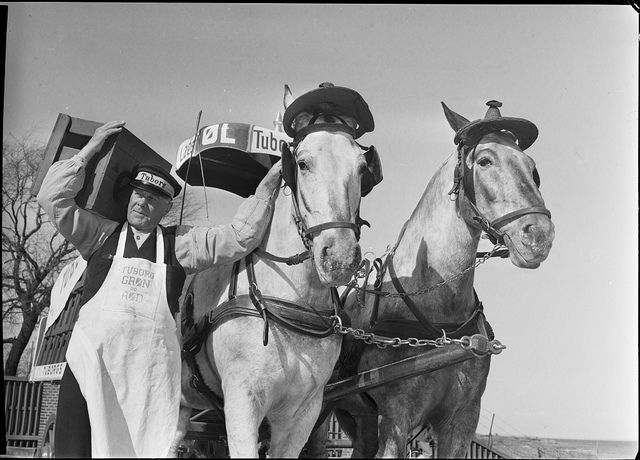 tuborg beer delivery. skol! (i love the hats on the horses... are they party hats? sombreros?)