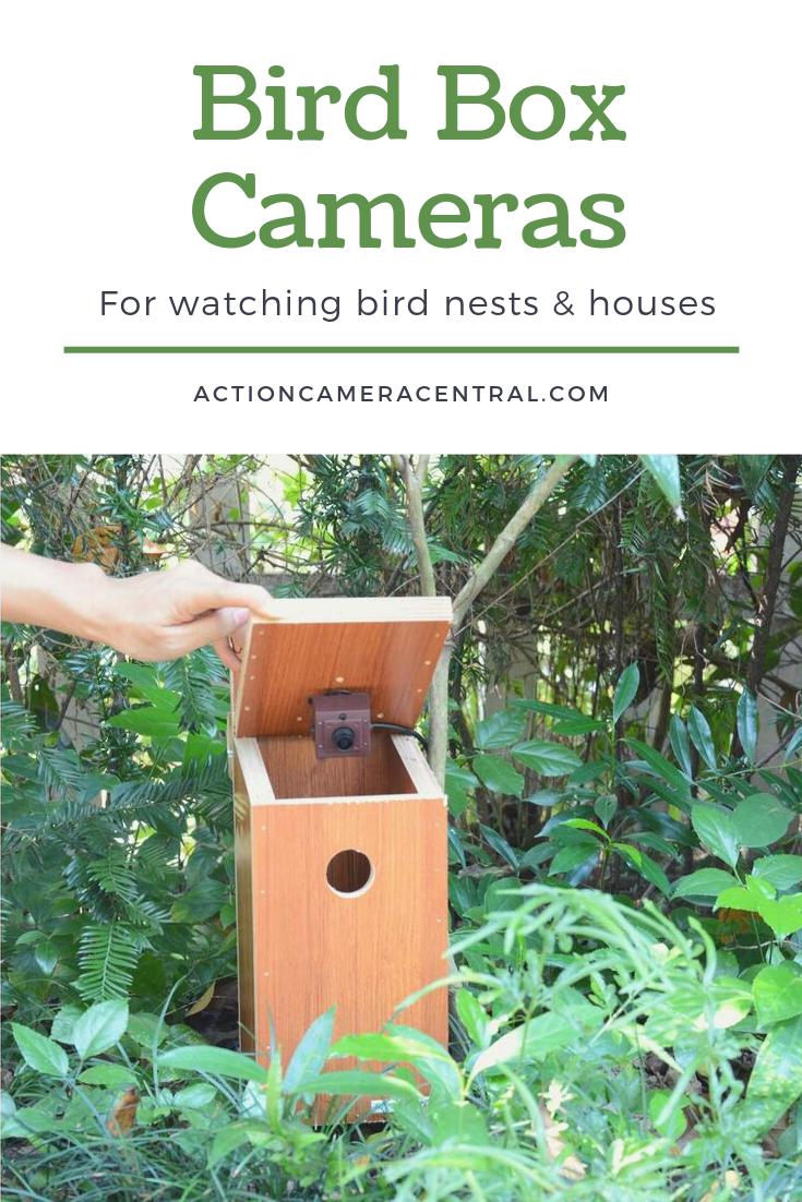 Best Bird Box Cameras For Nests Birdhouses Bird Box Camera Box Camera Bird Boxes