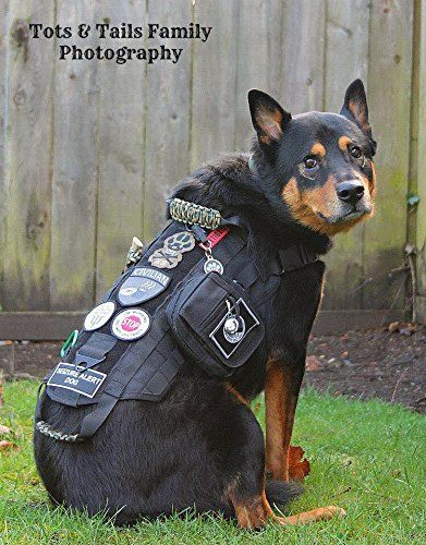 Amazon Com Onetigris Tactical Dog Training Molle Vest Harness