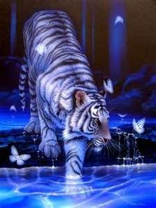 White Tiger Blue Background Binatang Buas Binatang Hewan