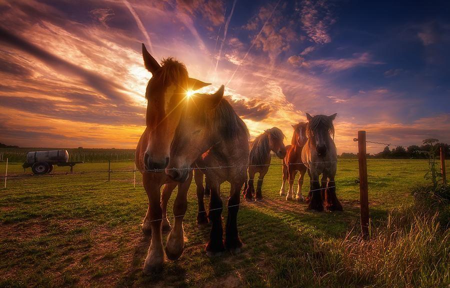 Friendship by Iván Maigua: Fine Art Photography #photography #amazingpics http://alldayphotography.com
