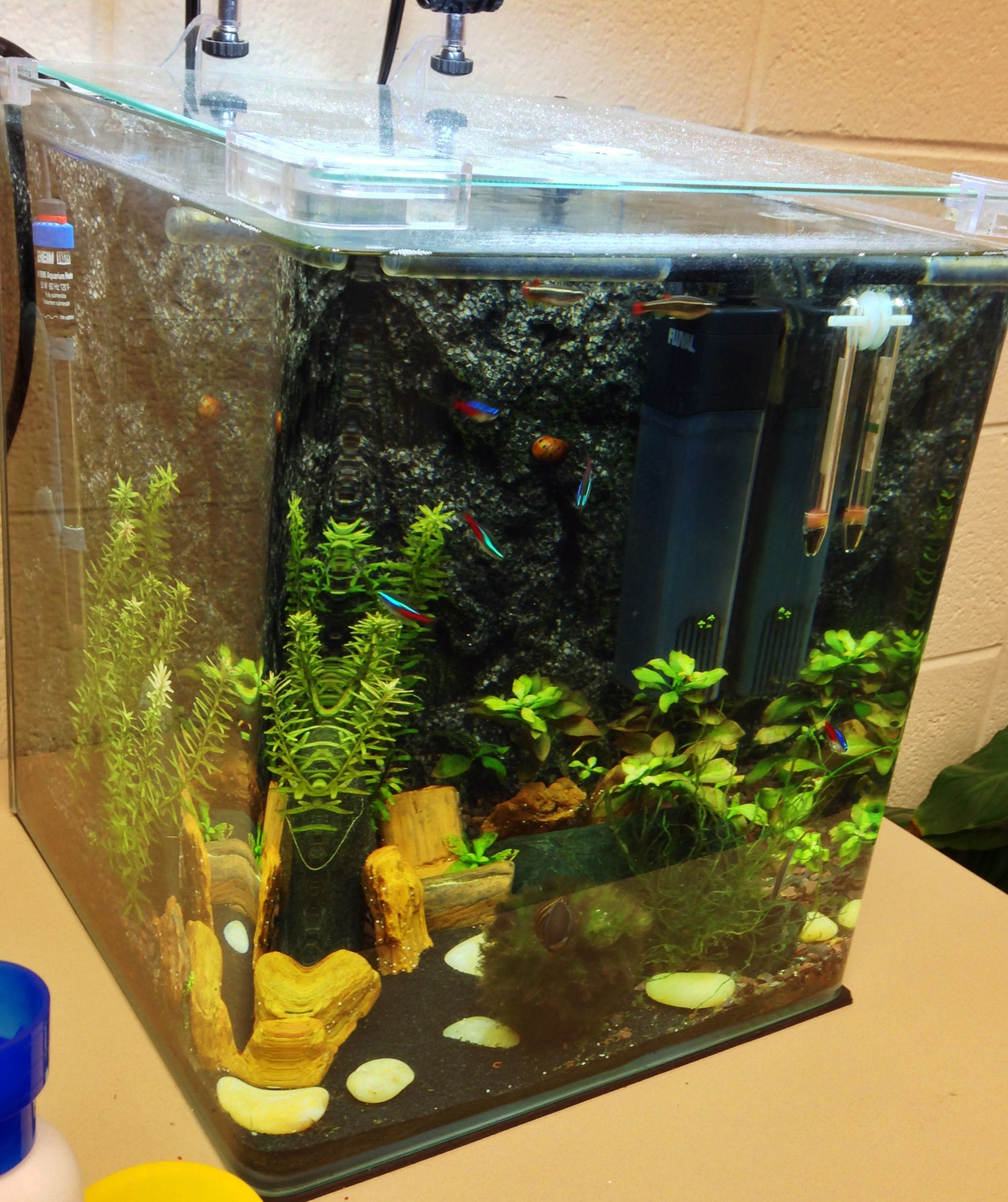The office tank - I don't really love it as much as my home tank. And it shows...