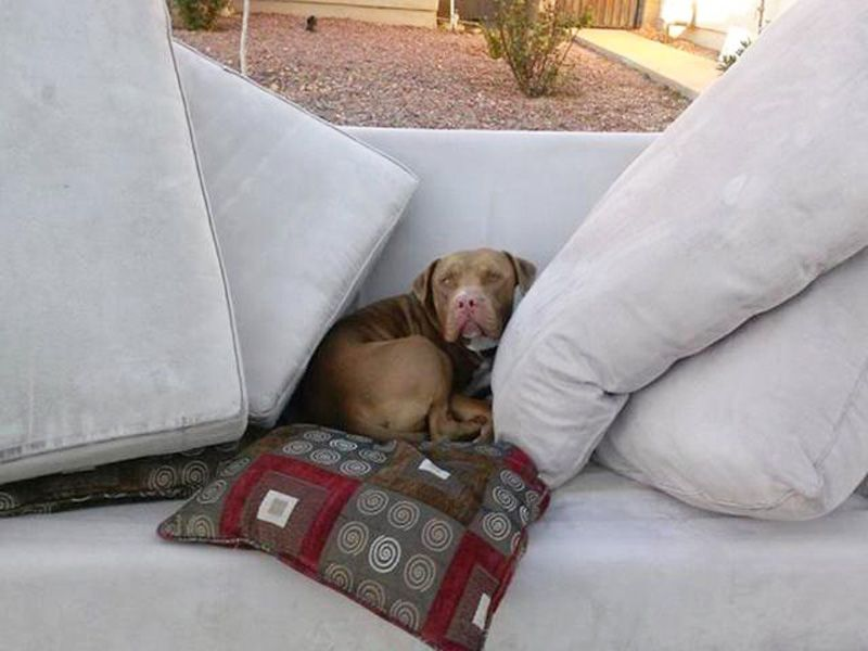 Moving Owner Abandons Dog On Couch Outside