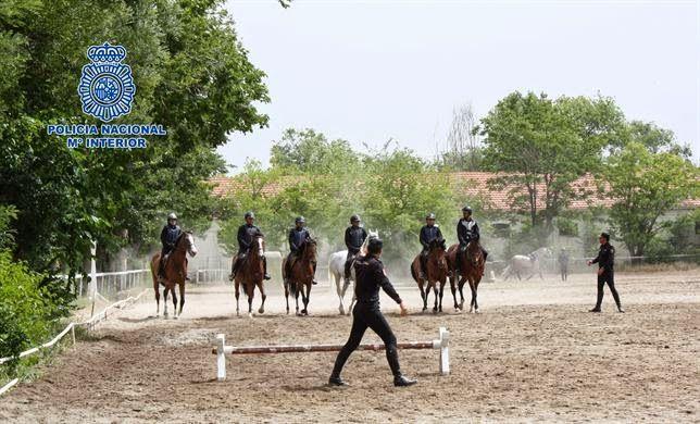 Todos Policías: Los caballos de la Policía Nacional se entrenan en...