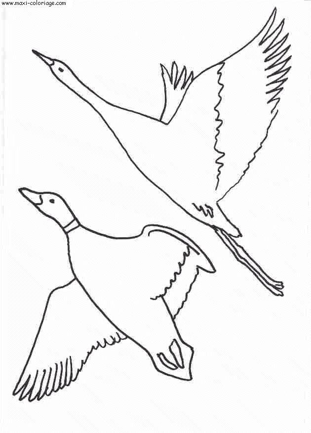 Coloriage Chien De Chasse.Coloriage Oiseaux Dessin Oiseaux Oiseaux Coloriage Chien