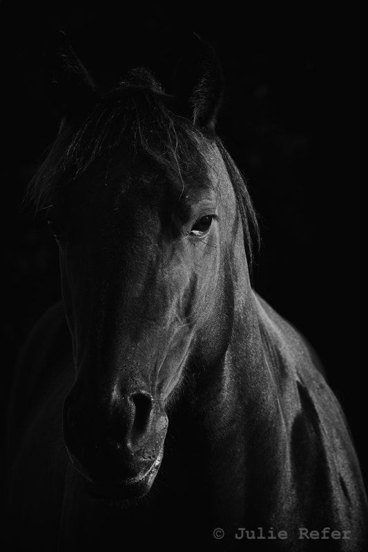Horse photograph black and white horse photography by jrefer 29 00