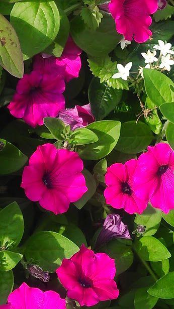 Magiya Cvetov Magic Flowers Soobshestvo Google Flora Flowers Flowers Love Flowers