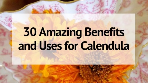 Calendula 30 Amazing Benefits and Uses in 2020 (With images)