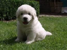 Afbeeldingsresultaat voor schattige honden