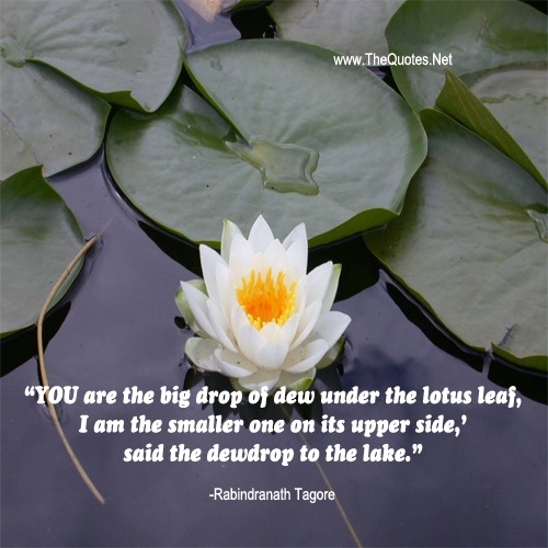 Pin By Raj As On Quotes In Image Lotus Flowers Quotes