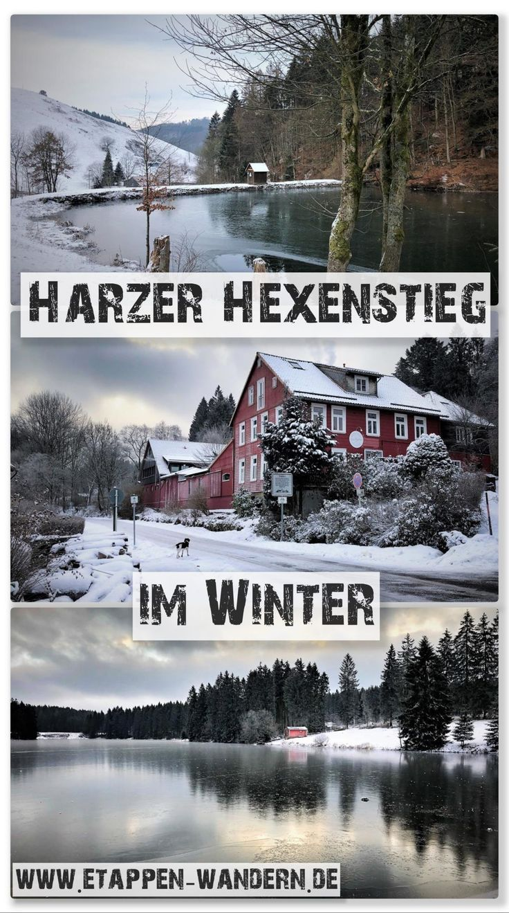 Photo of Harzer Hexenstieg in winter with dog – stage hiking