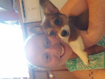 Pembroke Welsh Corgi Puppy For Sale In Arlington Wa Adn 40112 On