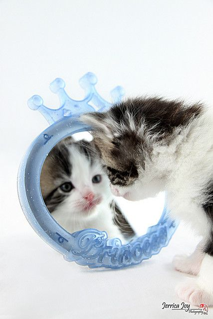 Princess in the Mirror Fancy cats, Cute baby animals