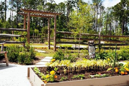 0c09f4cff8973d65b0b0efe5cd73bd6b - Volusia County Master Gardener Plant Faire
